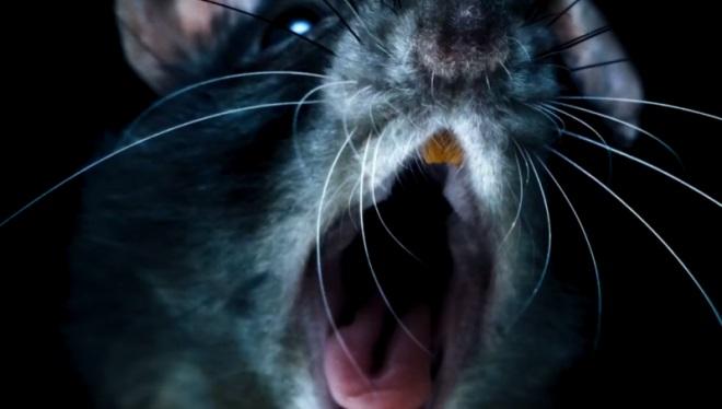 Tráiler de Rats
